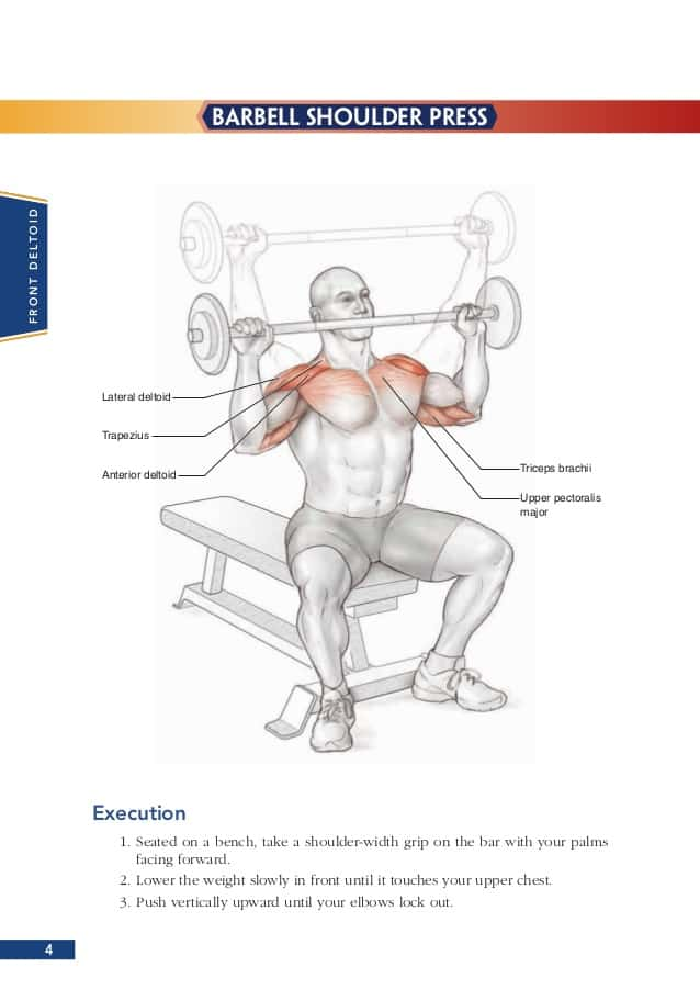 Perfect Shoulder Anatomy Bodybuilding Crest Anatomy And Physiology