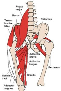Hip and Core Muscle